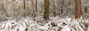Snow Chasing at the Barrington Tops, NSW