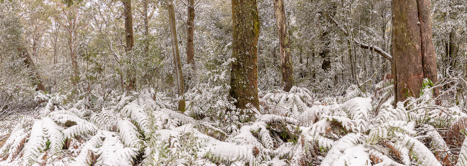 Read more about the article Snow Chasing at the Barrington Tops, NSW