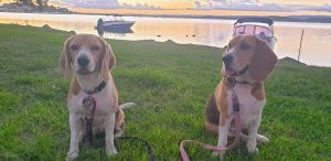 Read more about the article TRAVELLING/CARAVANNING WITH DOGS
